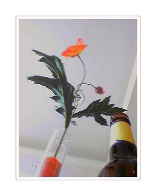 poppy still life