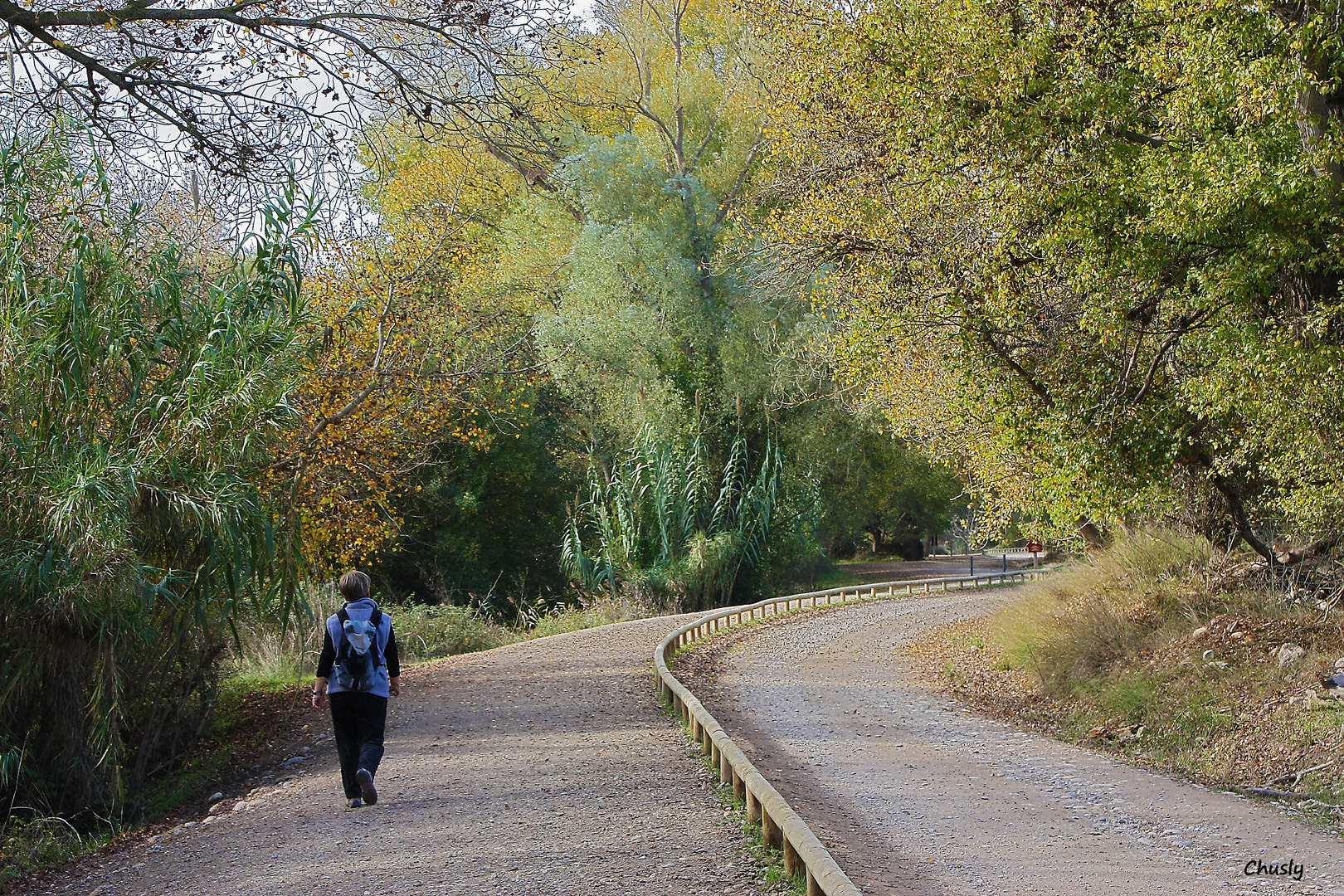 Por el camino verde, paseando