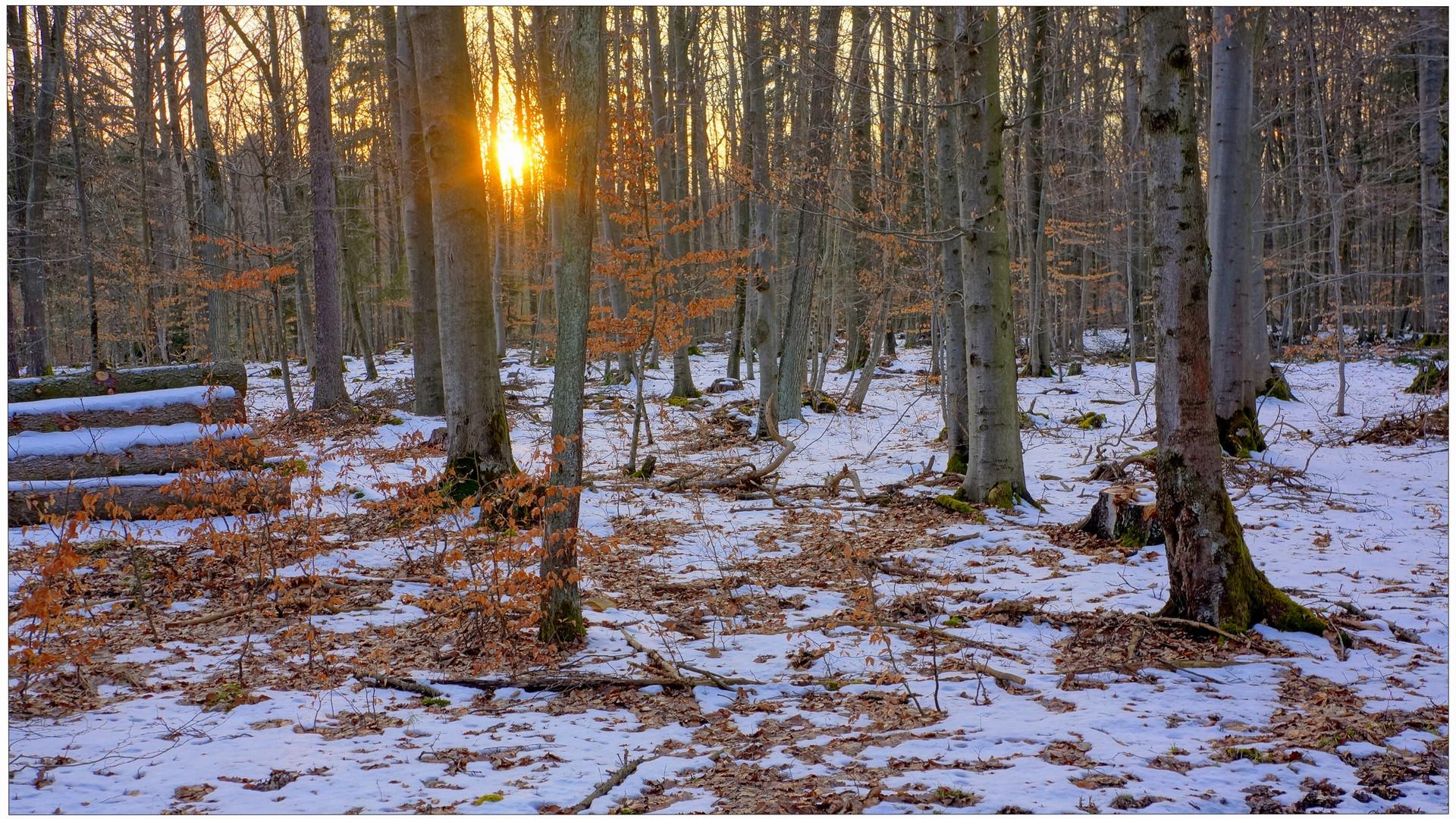 por la tarde en el bosque (abends im Wald)