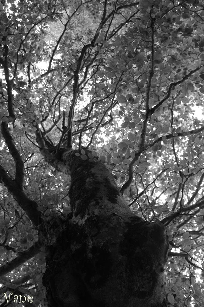 ... por los bosques de Cucayo ...