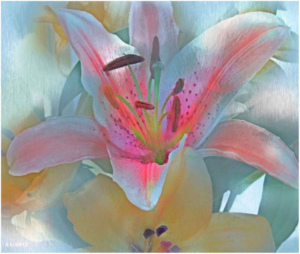 Por ser más dulce la añoranza...(Lilium 4)