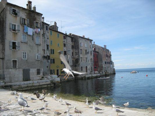 Port de Rovigno
