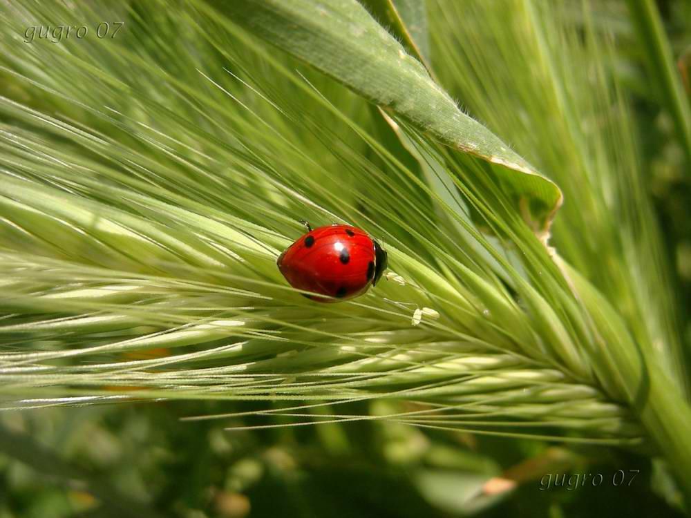 Portafortuna foto immagini piante fiori e funghi natura foto su fotocommunity - Piante portafortuna ...