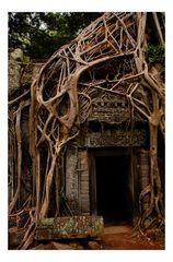 Porte de la jungle