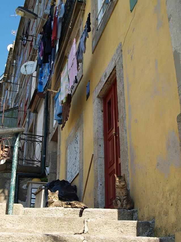 Portos Katzen