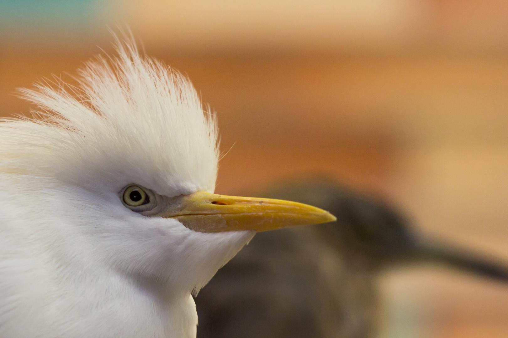 Porträt eines Vogels