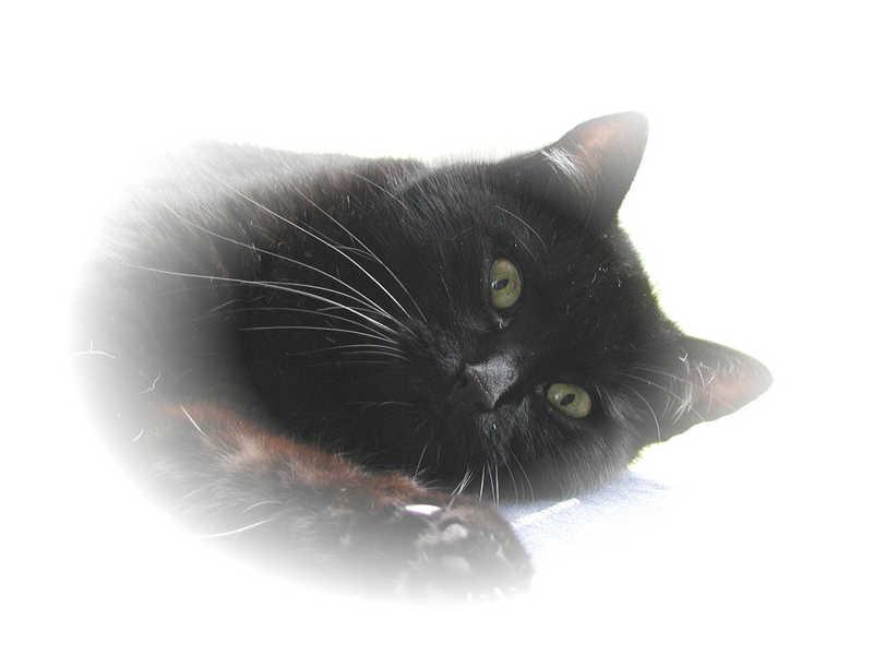 Porträtaufnahme einer Katze