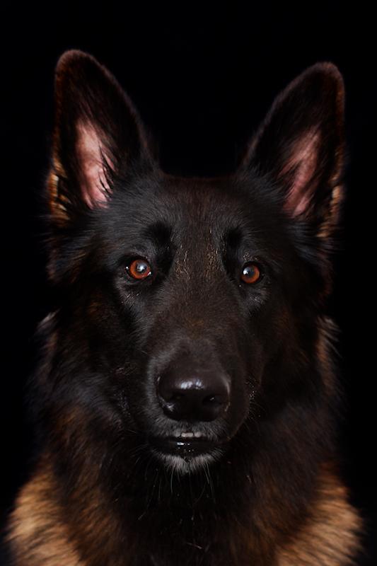 Portrait Cairon
