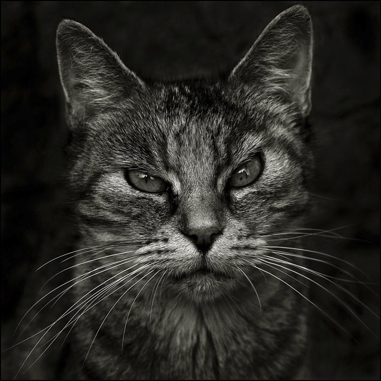 Portrait de chatte
