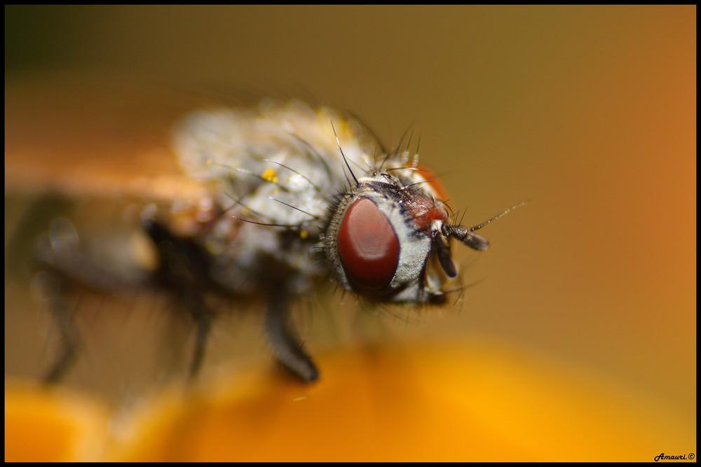 Portrait de la mouche.