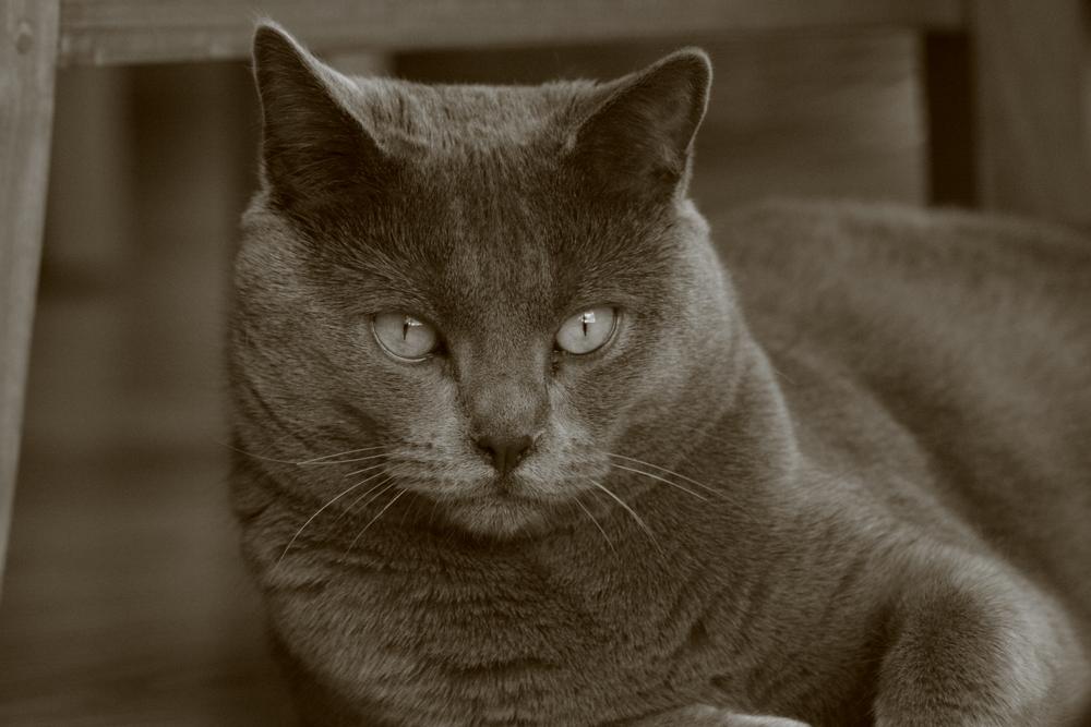 portrait de mon chat