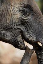 portrait d'éléphant 2