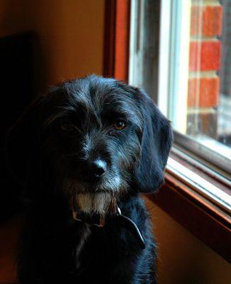 Portrait der Hundin