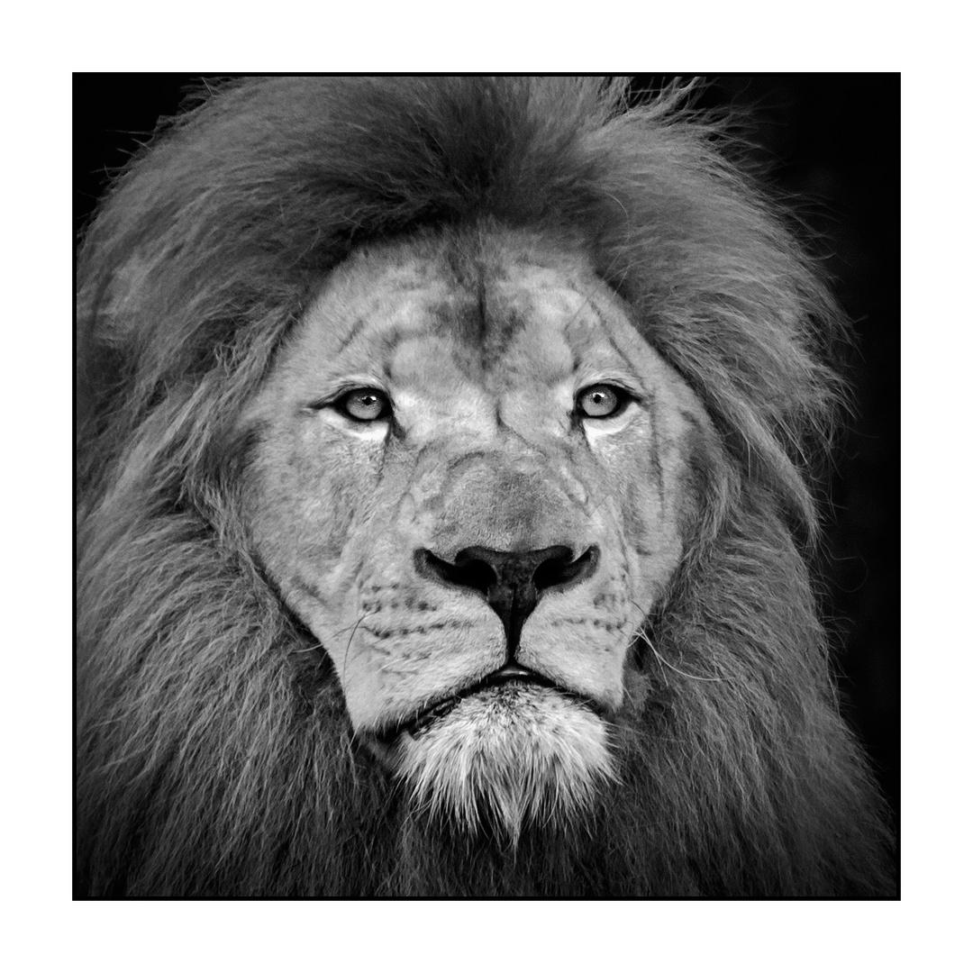 Portrait des Königs