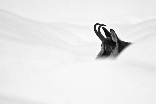 Portrait d'hiver...