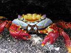 portrait einer krabbe