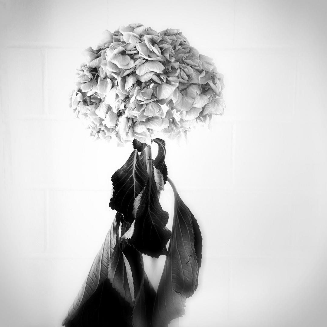 portrait einer pflanze