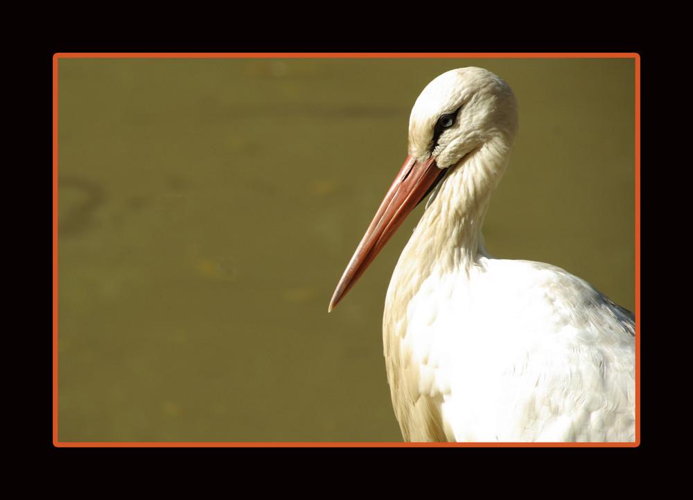 Portrait eines Storches
