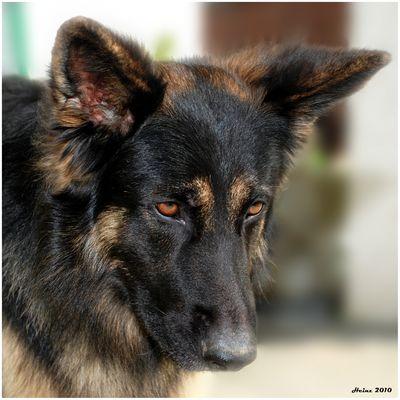 Portrait Ferienhund