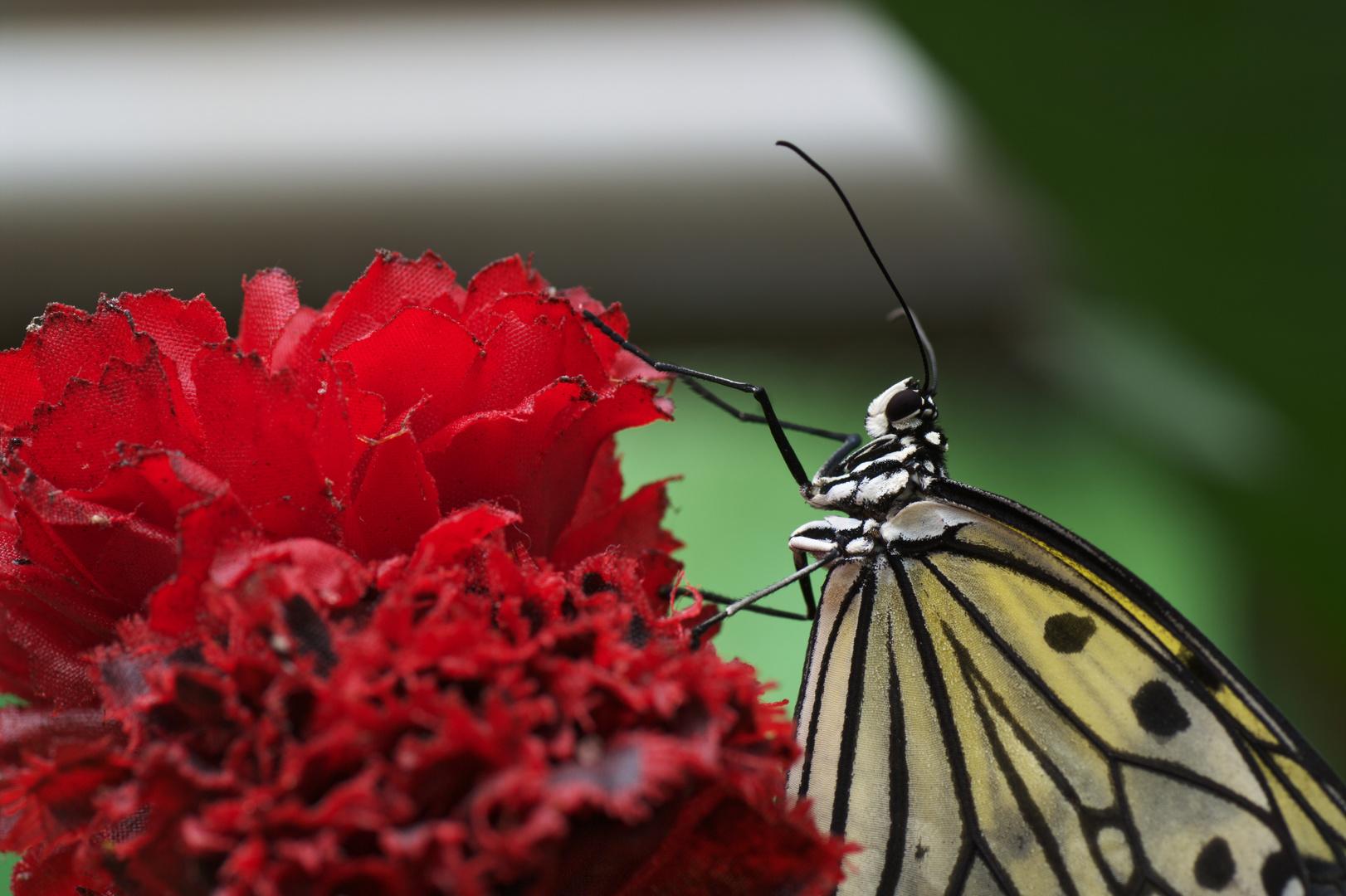 Portrait im Schmetterlingspark