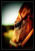 - Portrait in Lomo Effects -