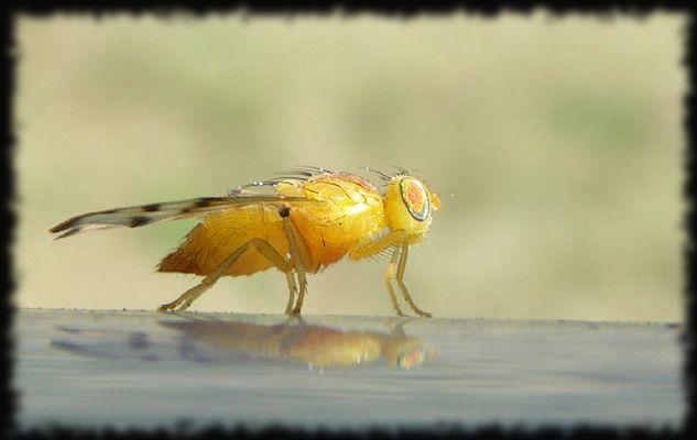 Portrait jaune poilu