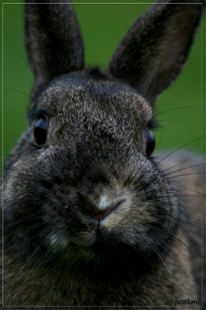 Portrait lapinette
