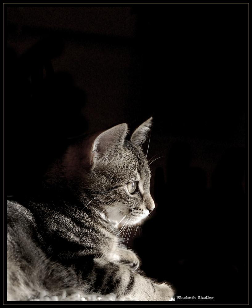 Portrait meiner Katze