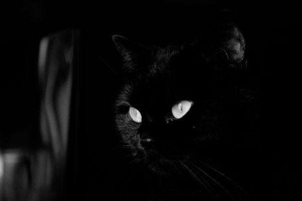 Portrait of the Artist as a Black Cat