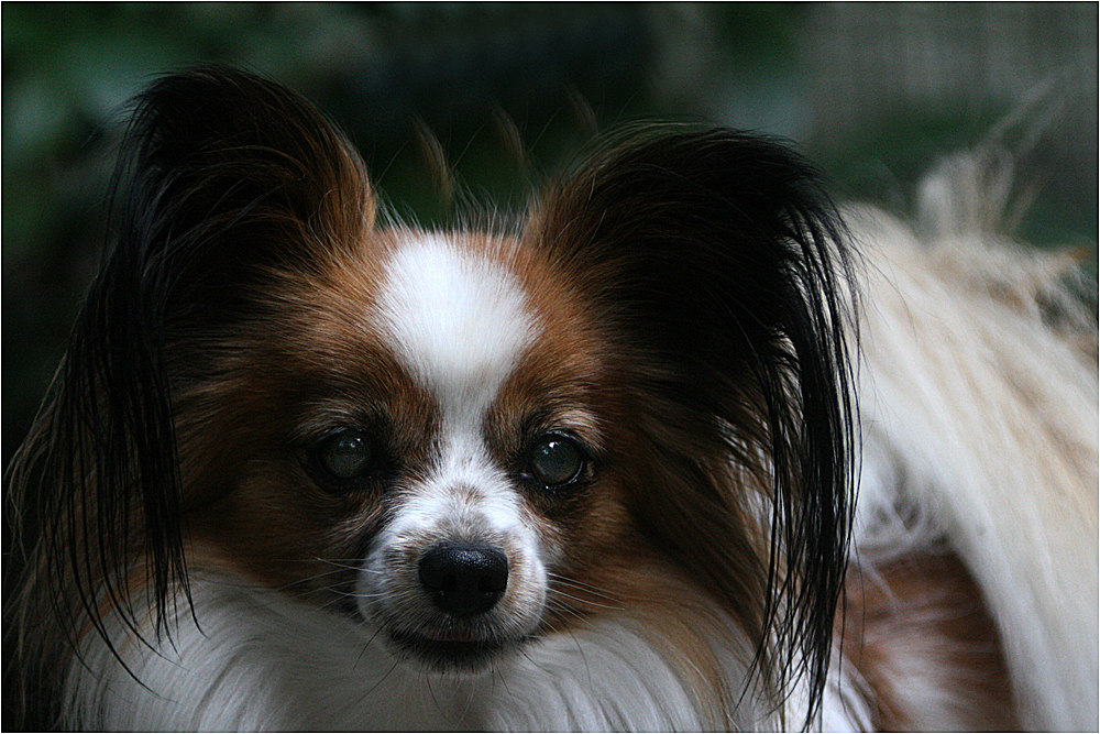 Portrait Papillon