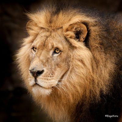 Portrait vom König