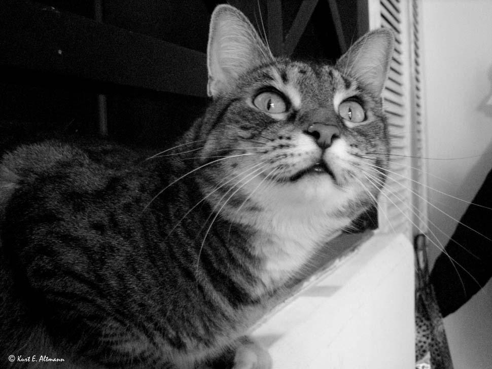 Portrait von ILLY
