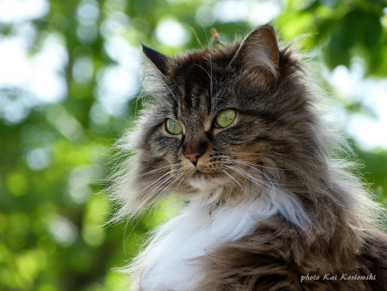 """Portrait - """" Wildkatze """""""
