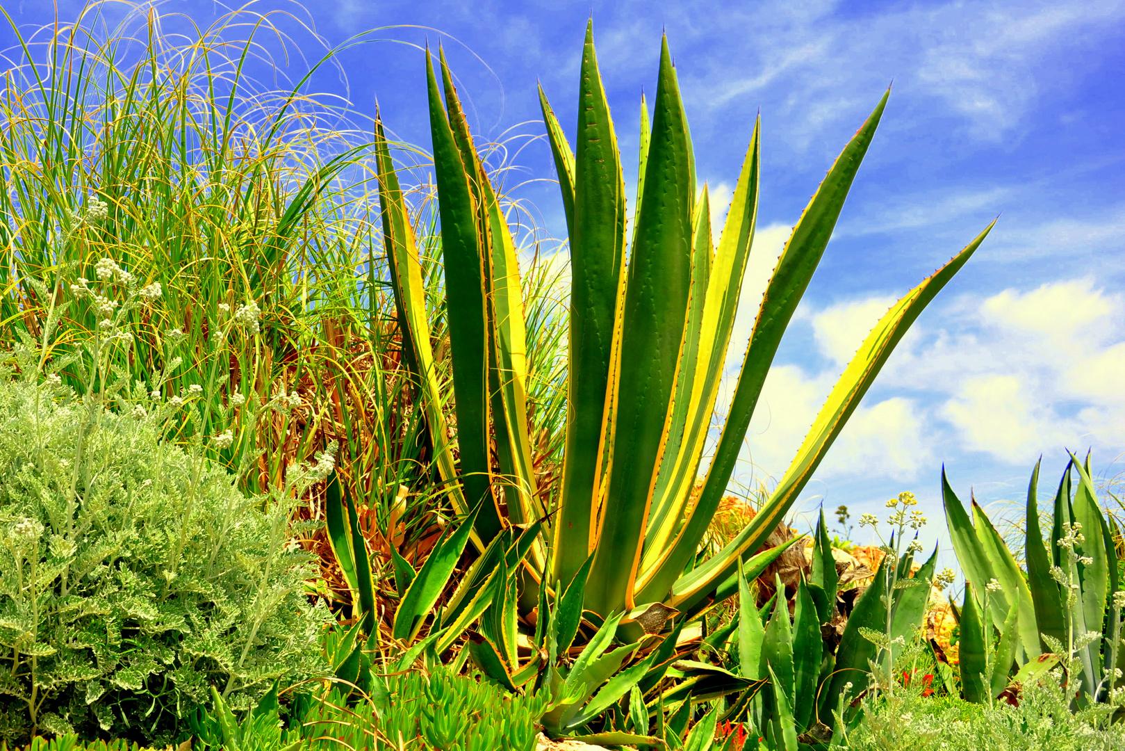 Portugal Algarve Natur