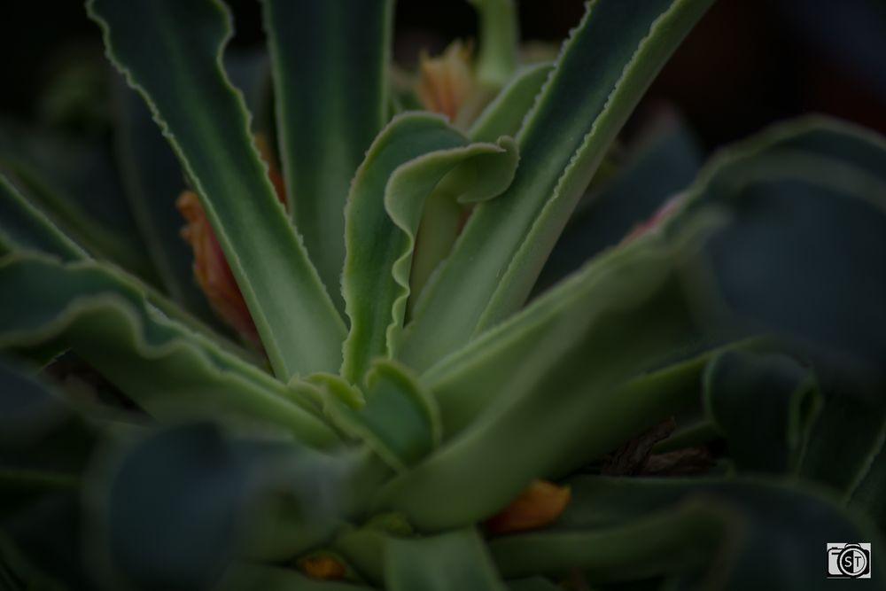 Porzellan-Röschen Blätter