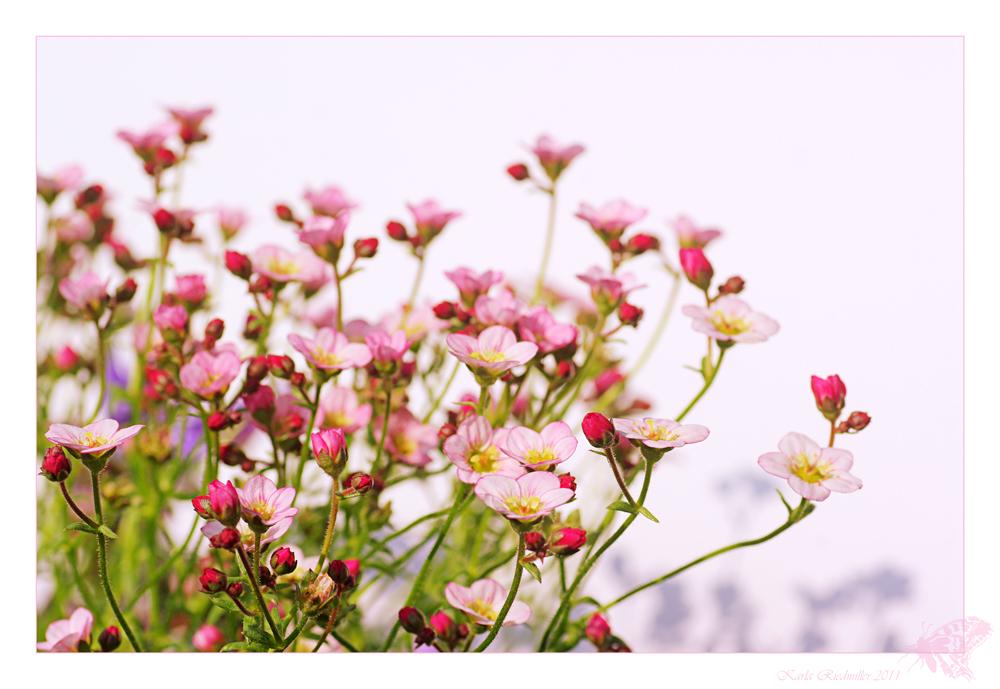 ... Porzellanblümchen ......