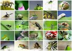 posing insects