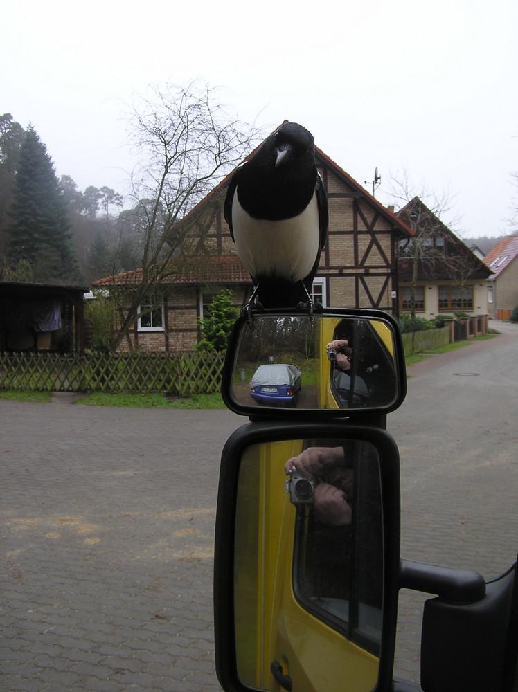 Post-Elster (Neuhütte bei Eberswalde)