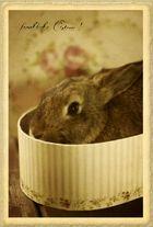 postfürhaiti.de - fröhliche Ostern!