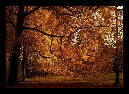 Postkarte mit Herbst