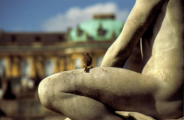 Potsdam Sanssouci aus der Vogelperspektive