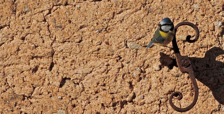Pour Didier Marzin: L'ami des oiseaux.