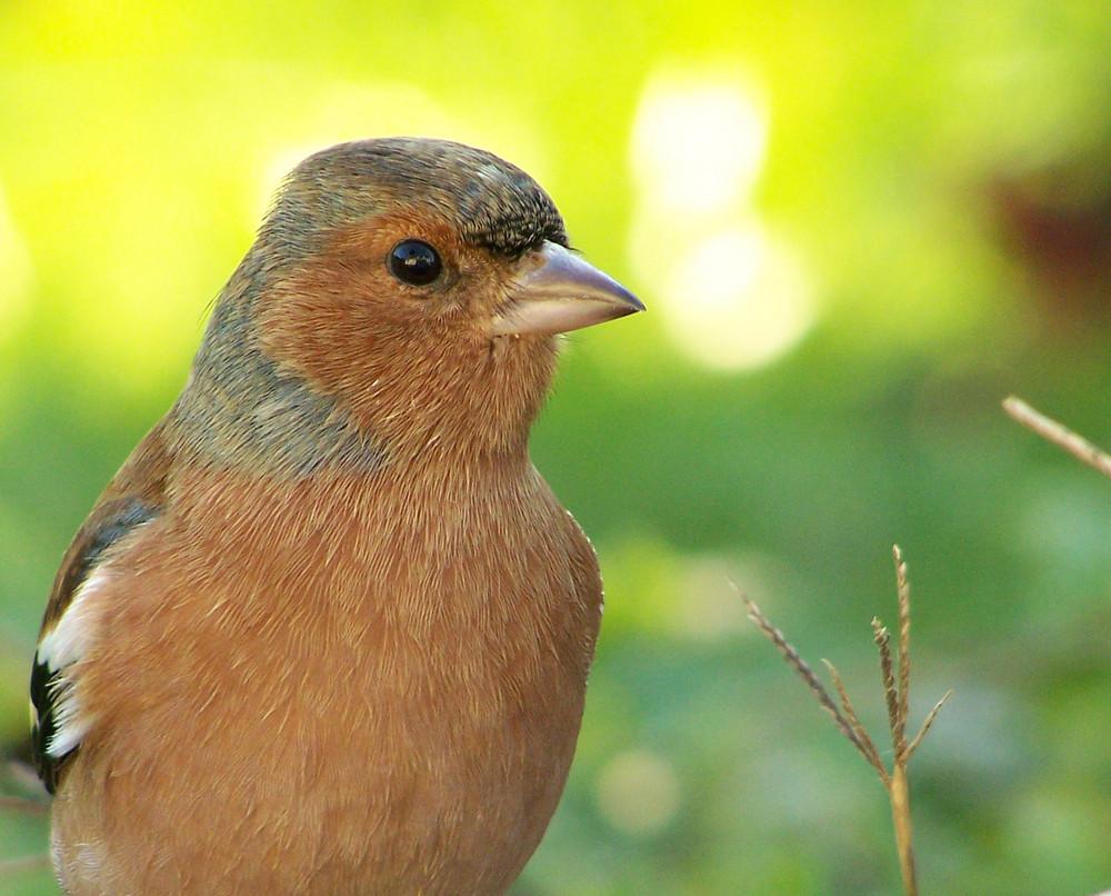 Pour faire le portrait d'un oiseau.....