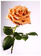 Pour ma Valentine ;-)