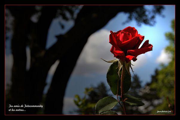 Pour toi Daniel, mon ami.........Jean-Patrick CALI
