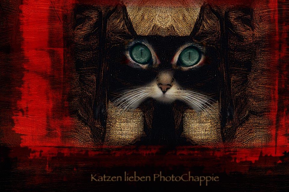 …pour tous les chats :-)