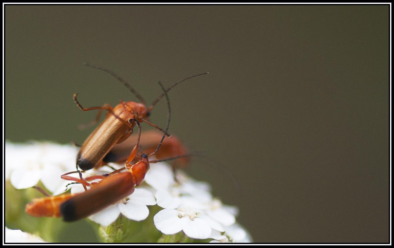 Pour une poignée de nectar