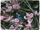 Pouso nas Cerejeiras