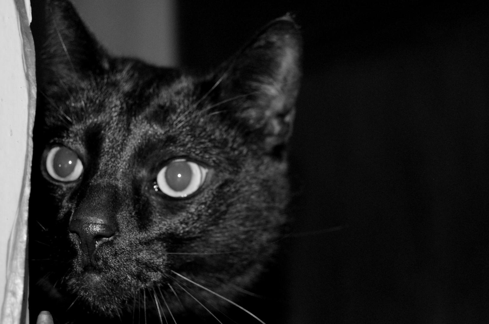 Pouyou le chat