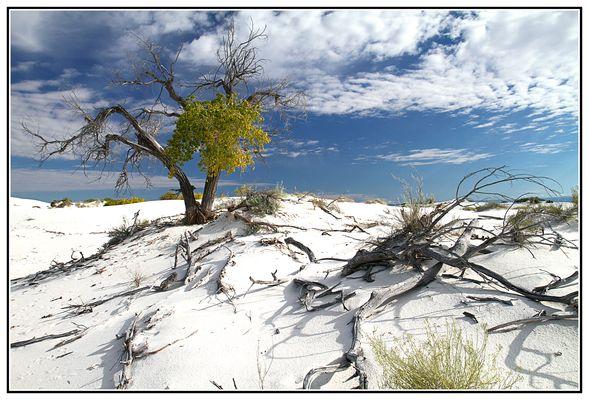 Powdered Desert